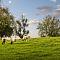 sheep-grazing-peso-K3-2440.jpg